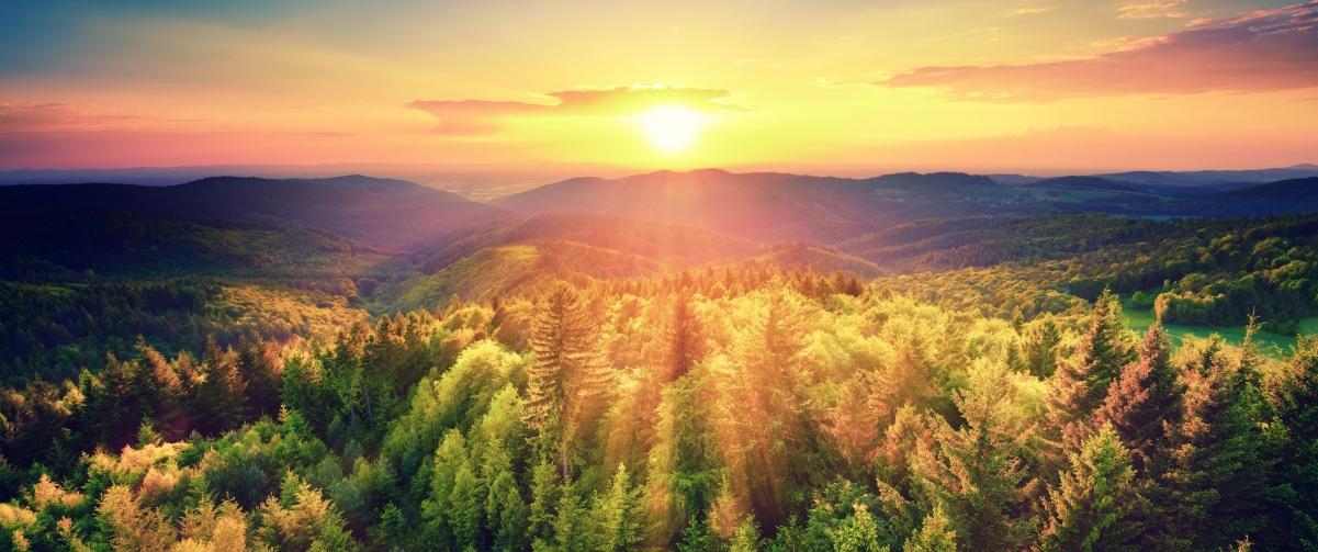 秋天森林风景如画日落3440x1440高端电脑桌面壁纸