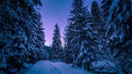 冬天冷杉林风景高端桌面4K+高清壁纸图片