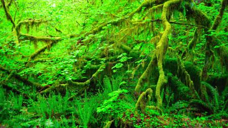 绿色树木极品游戏桌面精选4K+高清壁纸