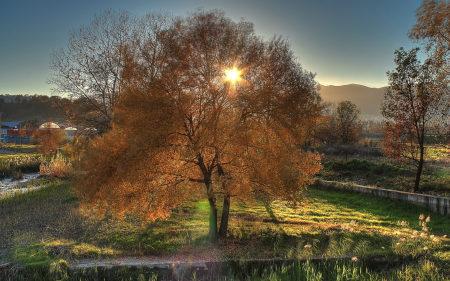 秋天树木风景高端桌面4K+高清壁纸图片