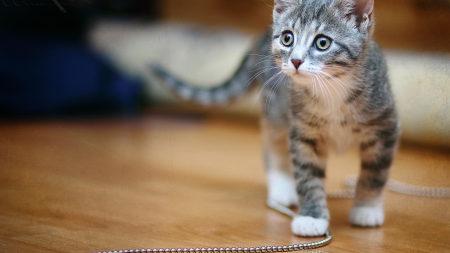 踩着珠链的小猫高端桌面4K+高清壁纸图片