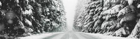 大雪覆盖的道路和森林高端桌面4K+高清壁纸图片