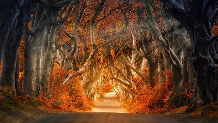 秋天道路两旁茂密的树木高端桌面4K+高清壁纸图片
