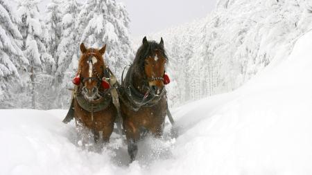 雪地拉货的马高端桌面4K+高清壁纸图片