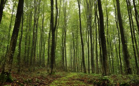 森林风景高端桌面4K+高清壁纸图片