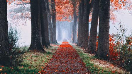 雾中的枫树和道路高端桌面4K+高清壁纸图片