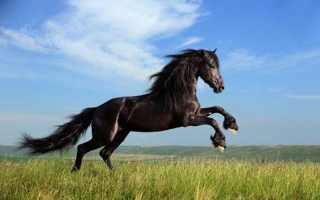 草原上奔腾的骏马高端桌面4K+高清壁纸图片
