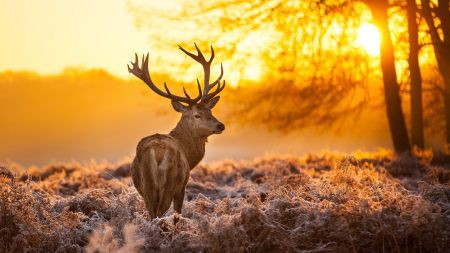 夕阳下的麋鹿高端桌面4K+高清壁纸图片