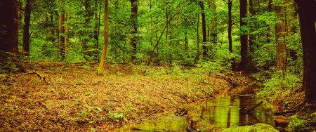 绿色森林高端桌面4K+高清壁纸图片