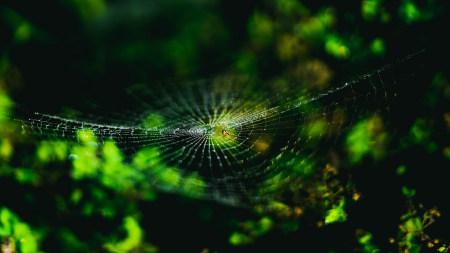 绿色植物上的蜘蛛网高端桌面4K+高清壁纸图片