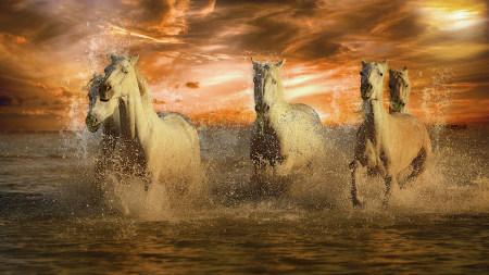 水中奔跑的马群高端桌面4K+高清壁纸图片