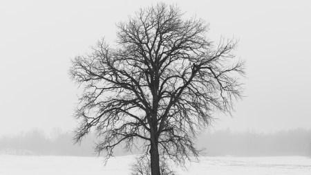冬天的枯树极品游戏桌面精选4K+高清壁纸