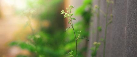 墙边的绿色植物极品壁纸推荐高清壁纸