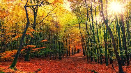 秋天的树林高端桌面4K+高清壁纸图片