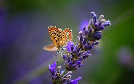 花朵上的蝴蝶高端桌面4K+高清壁纸图片