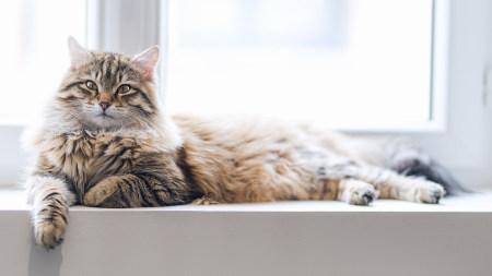 窗台上的猫咪高端桌面4K+高清壁纸图片