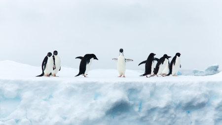 企鹅高端桌面4K+高清壁纸图片