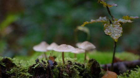 野生小蘑菇极品游戏桌面精选4K+高清壁纸