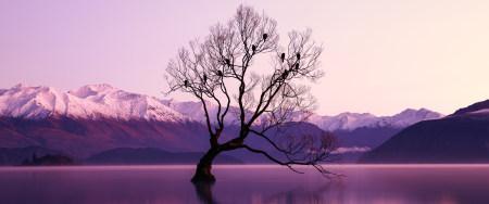 湖中央的树木极品游戏桌面精选4K+高清壁纸
