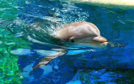 蓝色水中的海豚高端桌面4K+高清壁纸图片