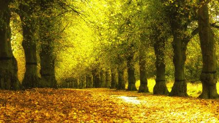 唯美秋天树木风景高端桌面4K+高清壁纸图片
