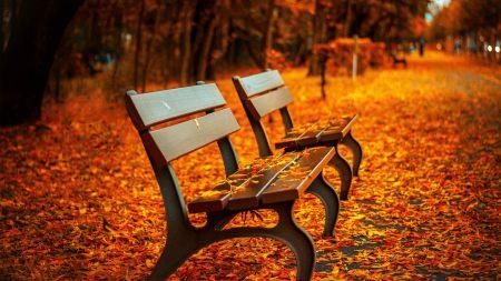 秋天公园长椅和落叶风景高端桌面4K+高清壁纸图片