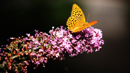 粉红色花卉上的蝴蝶高端桌面4K+高清壁纸图片