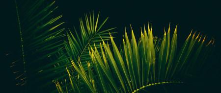 棕榈树极品游戏桌面精选4K+高清壁纸