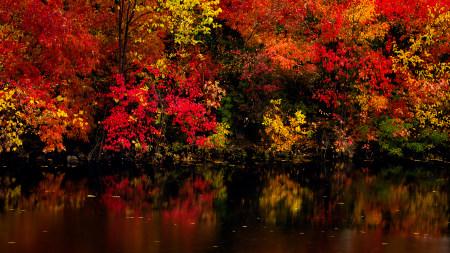湖边红树林倒影高端桌面4K+高清壁纸图片