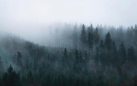 大雾中的森林高端桌面4K+高清壁纸图片