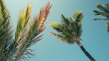 夏天天空棕榈树风景百变桌面精选高清壁纸