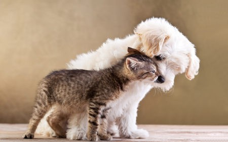 小狗与小猫高端桌面4K+高清壁纸图片