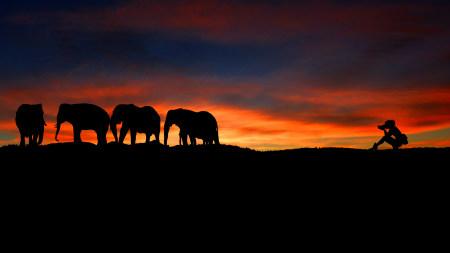 日落摄影师和大象剪影高端桌面4K+高清壁纸图片