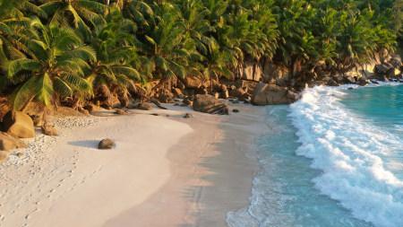 海滩旁的棕榈树高端桌面4K+高清壁纸图片
