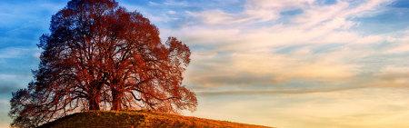 山顶的两棵树极品游戏桌面精选4K+高清壁纸