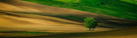 田野里的树高端桌面4K+高清壁纸图片