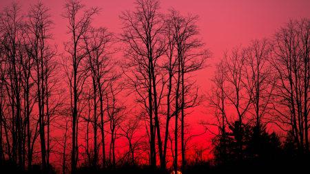 傍晚的天空和树木百变桌面精选高清壁纸