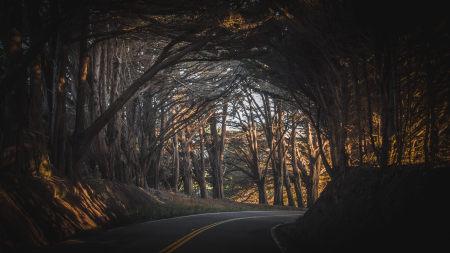 公路两旁茂密的树木高端桌面4K+高清壁纸图片
