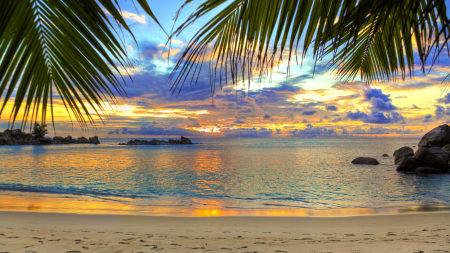 热带海滩棕榈树天空风景高端桌面4K+高清壁纸图片