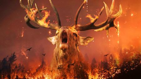 森林火灾 火中的鹿百变桌面精选高清壁纸