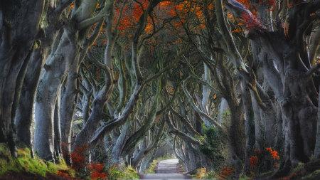 道路两旁密密麻麻的山毛榉树高端桌面4K+高清壁纸图片