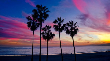 海滩上的棕榈树剪影高端桌面4K+高清壁纸图片