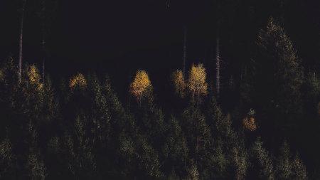 夜晚的树林百变桌面精选高清壁纸
