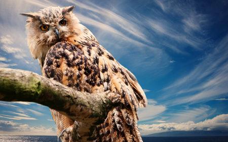 树干上的一只猫头鹰高端桌面4K+高清壁纸图片