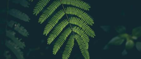 植物绿叶极品游戏桌面精选4K+高清壁纸