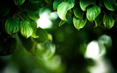 绿色的叶子高端桌面4K+高清壁纸图片