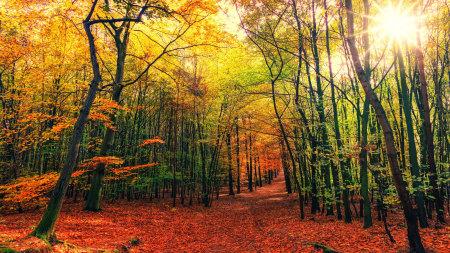 秋天的树林百变桌面精选高清壁纸