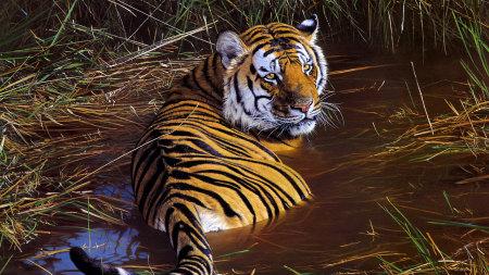 躺在水里的老虎高端桌面4K+高清壁纸图片