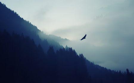 森林上空的飞鸟高端桌面4K+高清壁纸图片