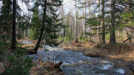 森林河流树木风景高端桌面4K+高清壁纸图片